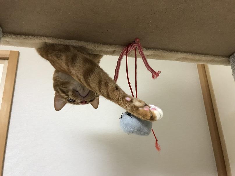 キャットタワー ネズミ