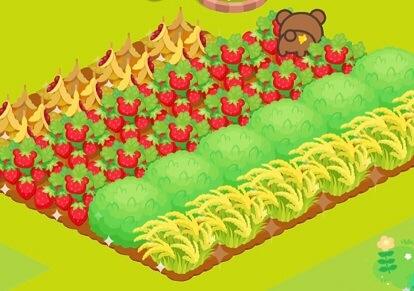 リラックマ農園 畑